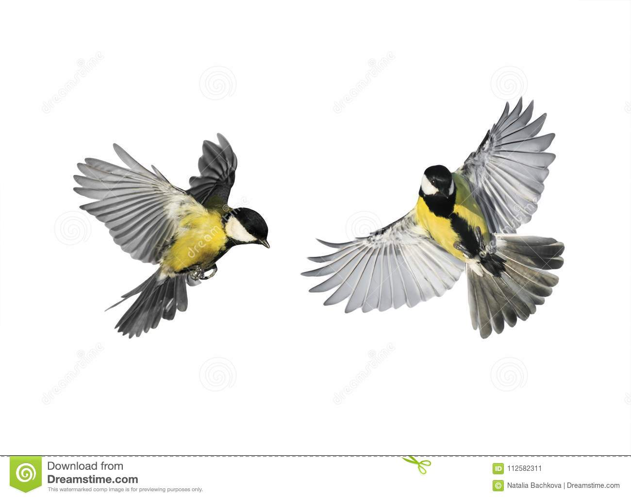 A couple of little birds chickadees flying toward spread its win