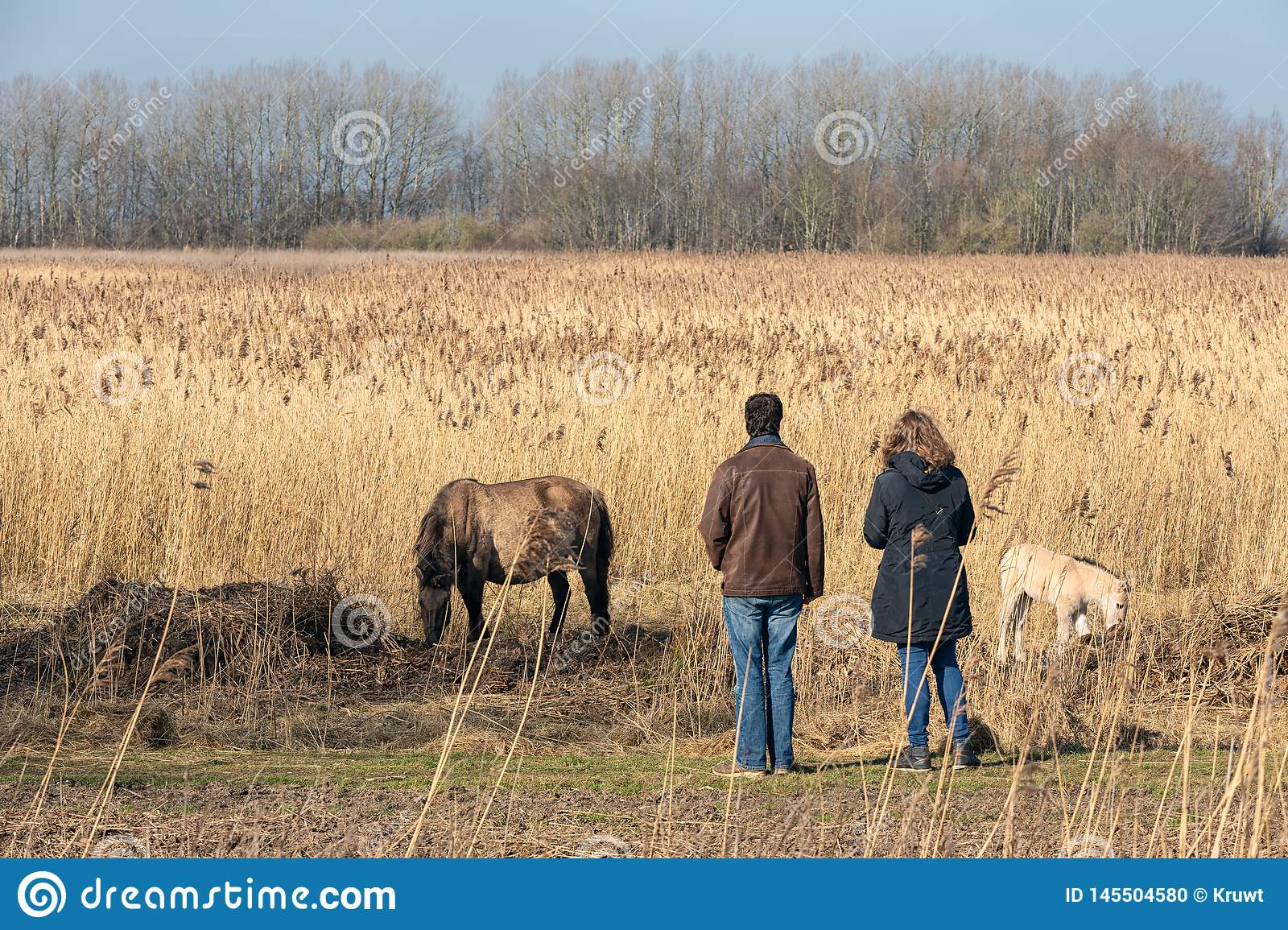 Couple looking to konikhorse with foal in Dutch National Park