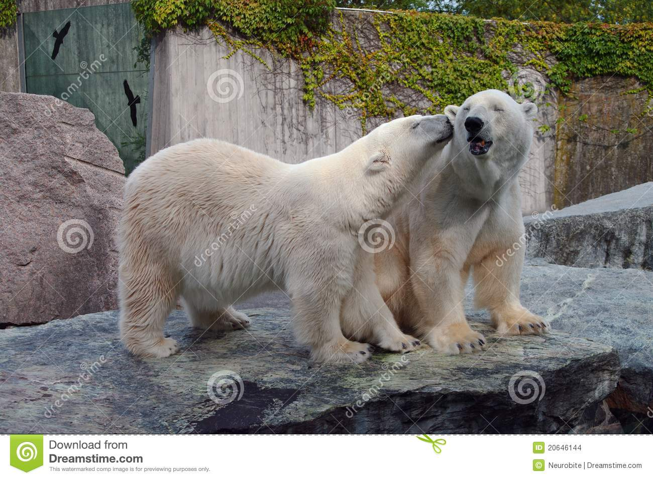 polar bear couple - photo #24