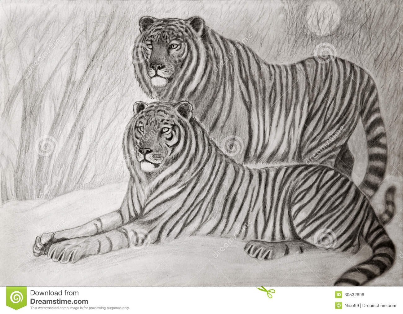 couple of siberian tigers royalty free stock image image 30532696