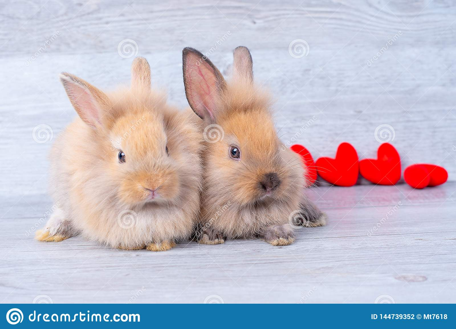 Couple small light brown bunny rabbits on gray background in valentines theme with mini heart behind them