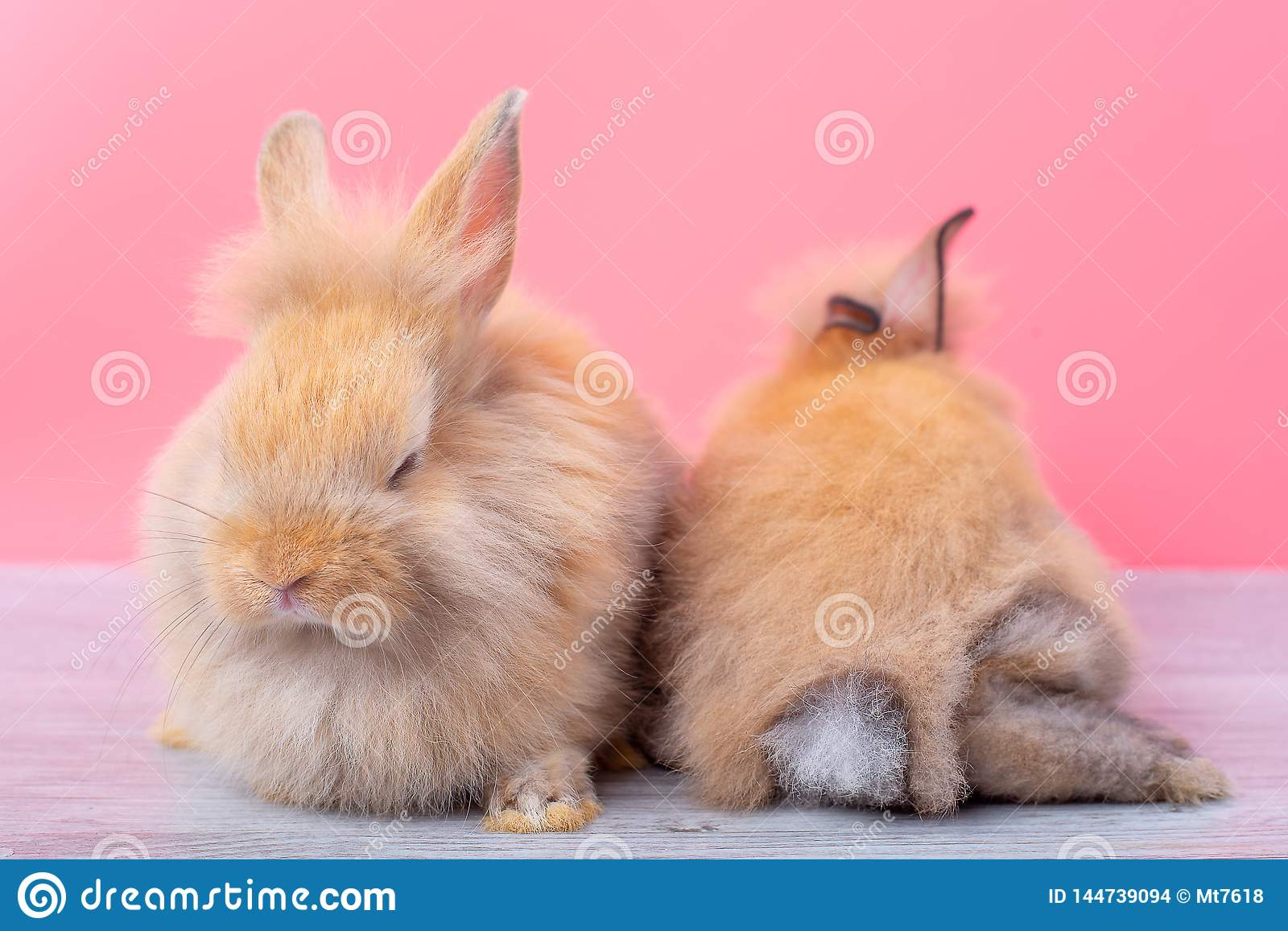 Couple small light brown rabbits stay on gray wood table and pink background with one is sleeping and the other show back of the