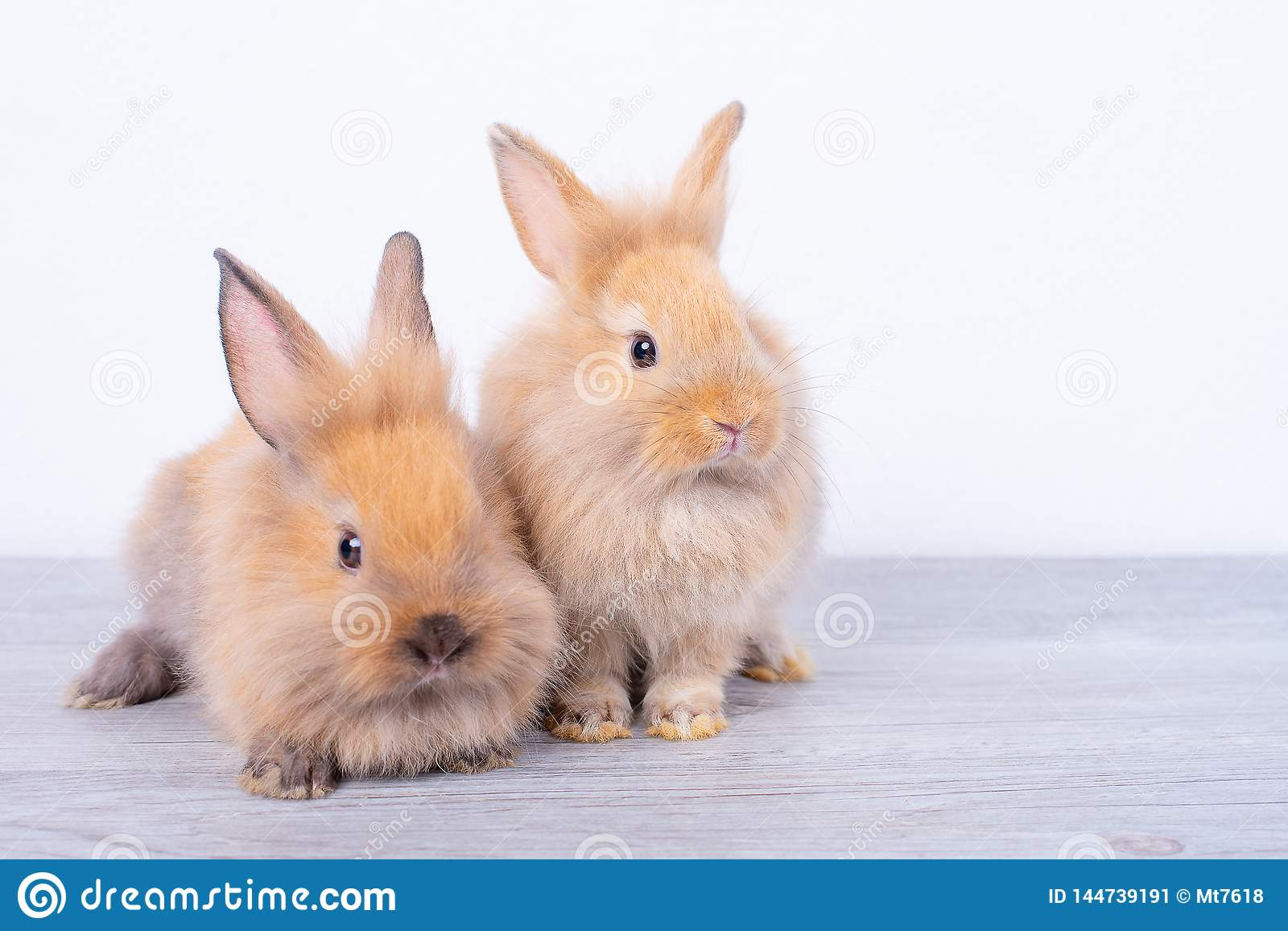 Couple small light brown rabbits stay on gray wood table with white background