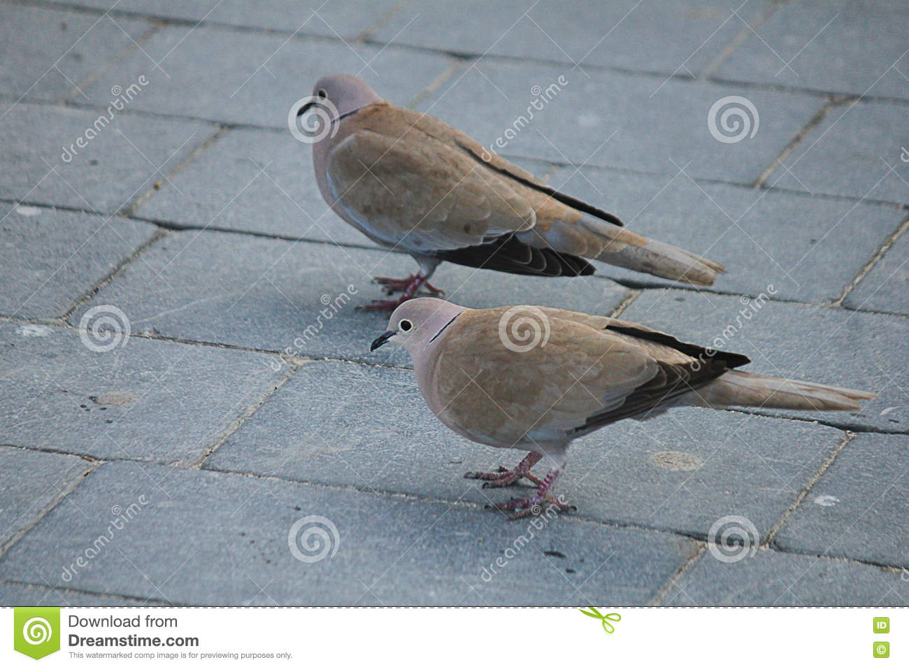 Couple of turtledoves