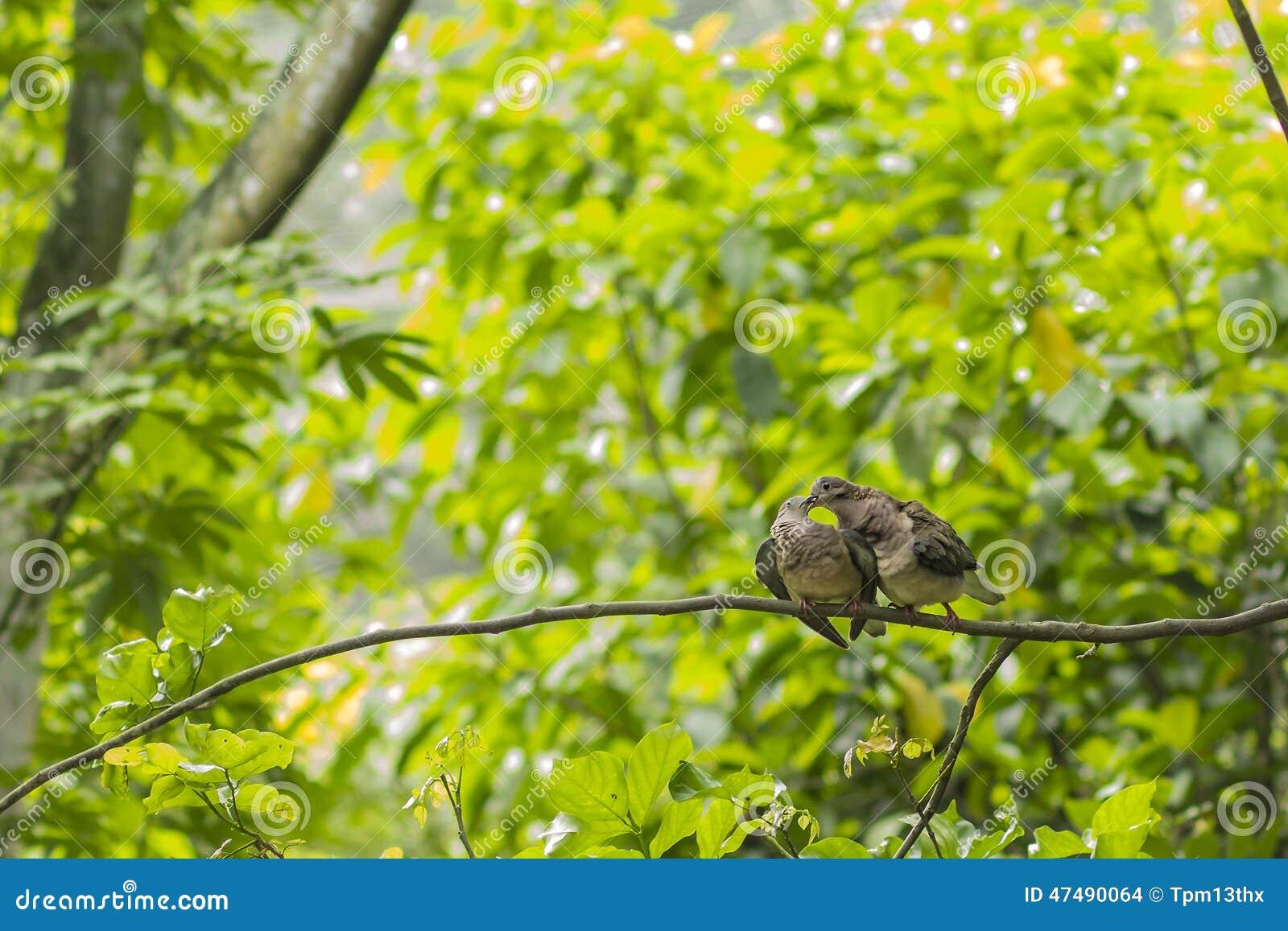 Couple of Turtledoves