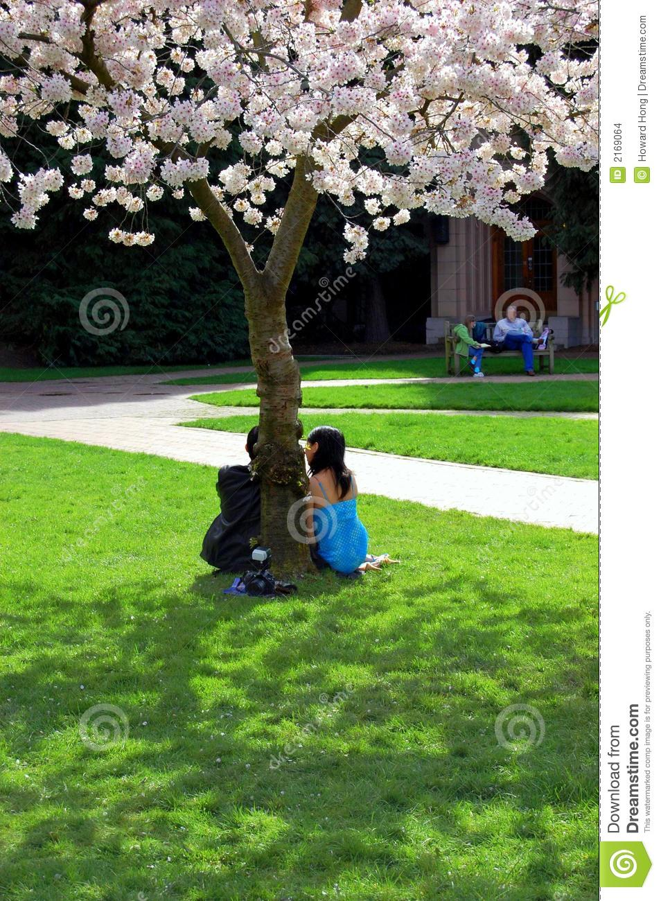 Couple Under A Tree Stock Images Image 2169064