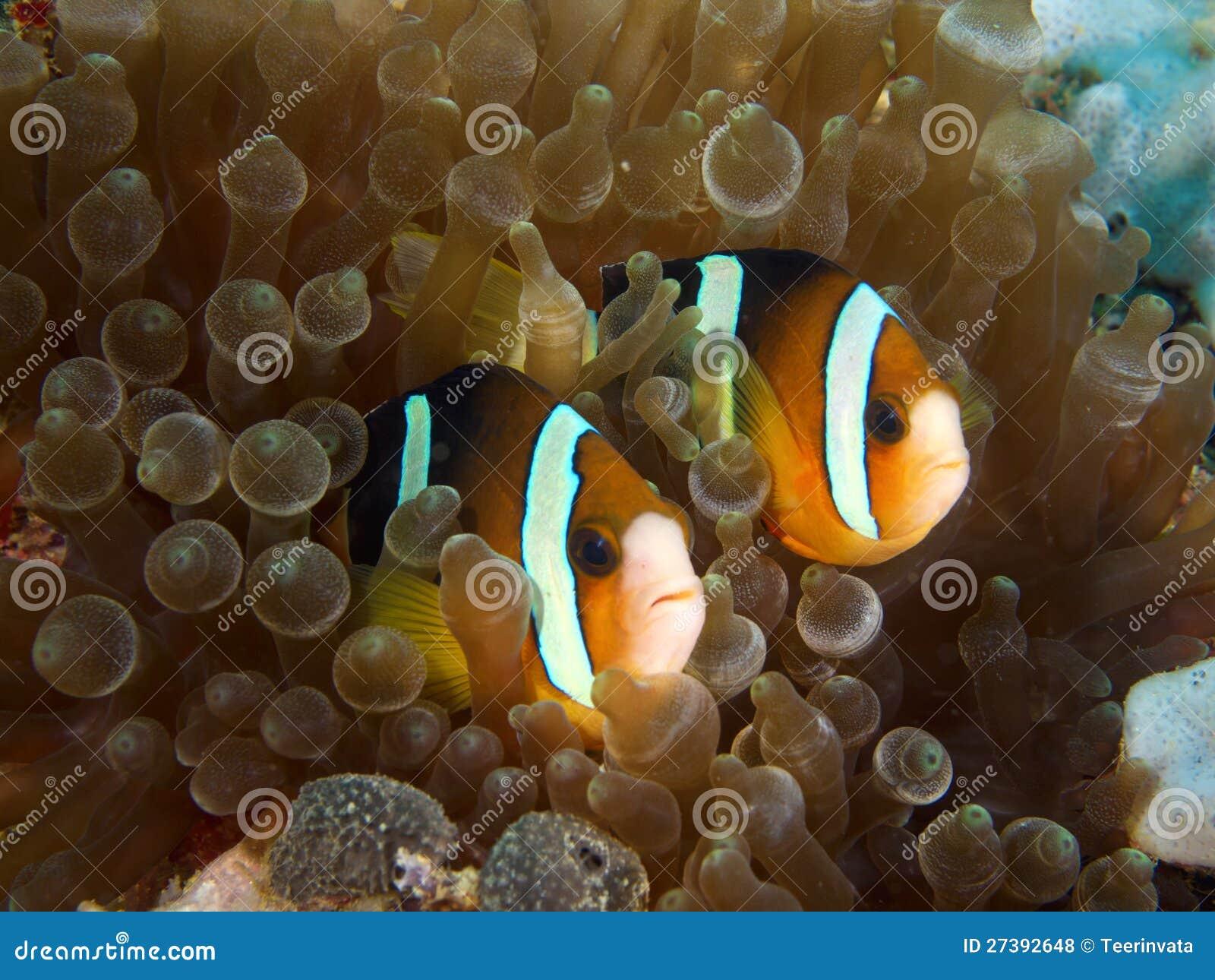 Couples de Nemo