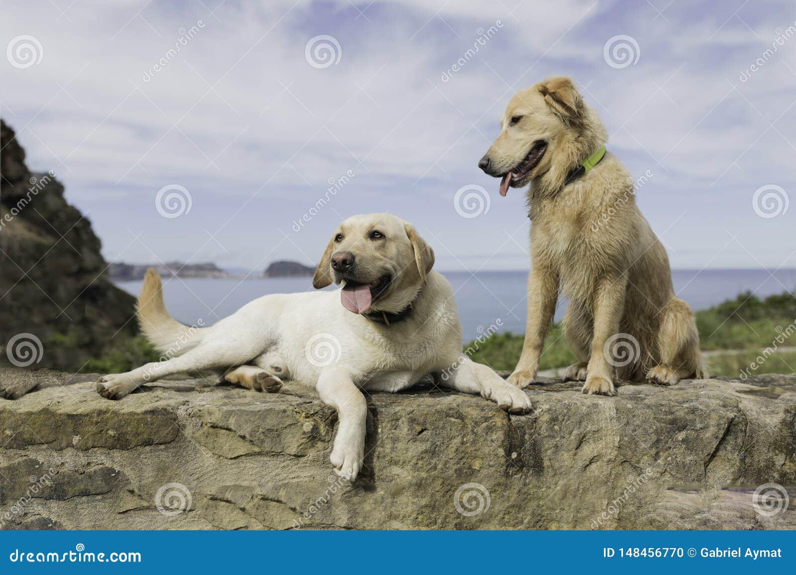 Couplez des chiens se reposant avec un beau paysage