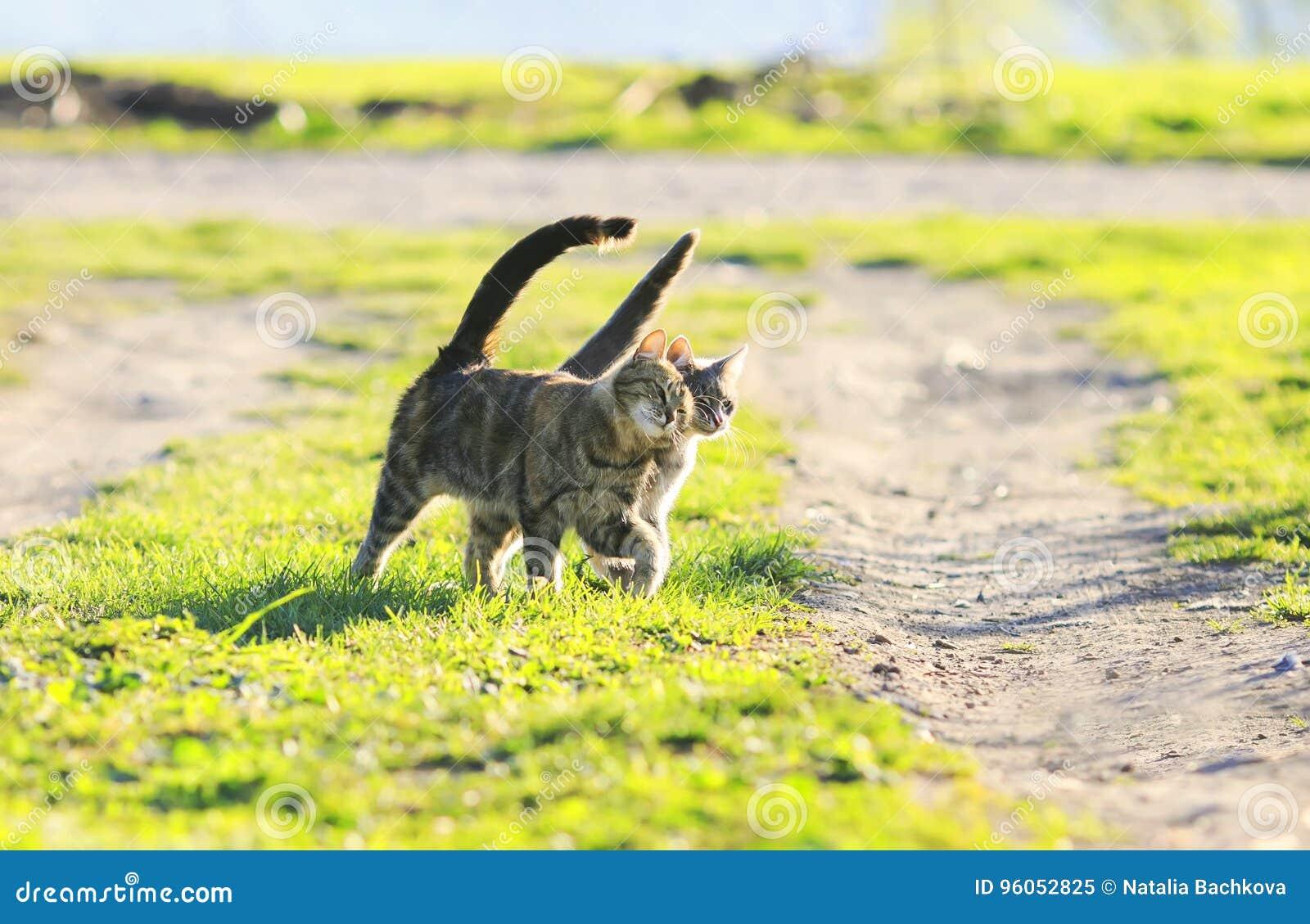 Couplez le bras de marche de chaton drôle dans le bras à l herbe verte juteuse