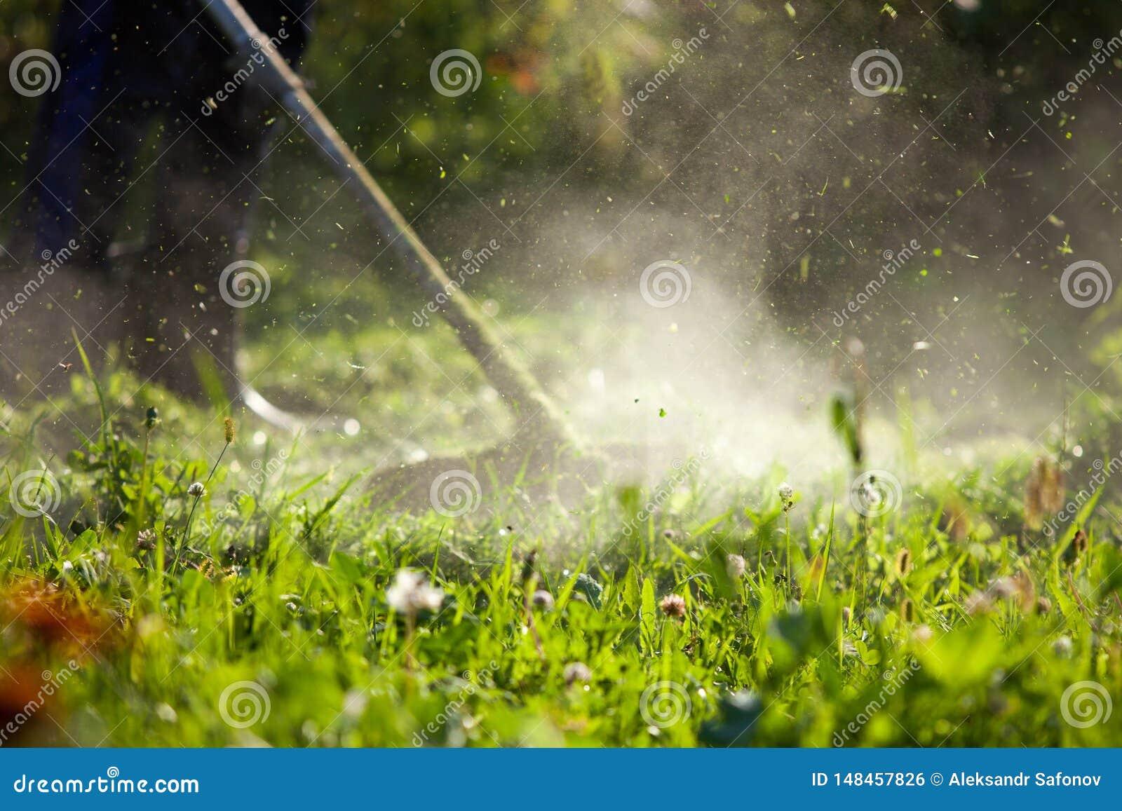 Coupure du haut trimmer d herbe