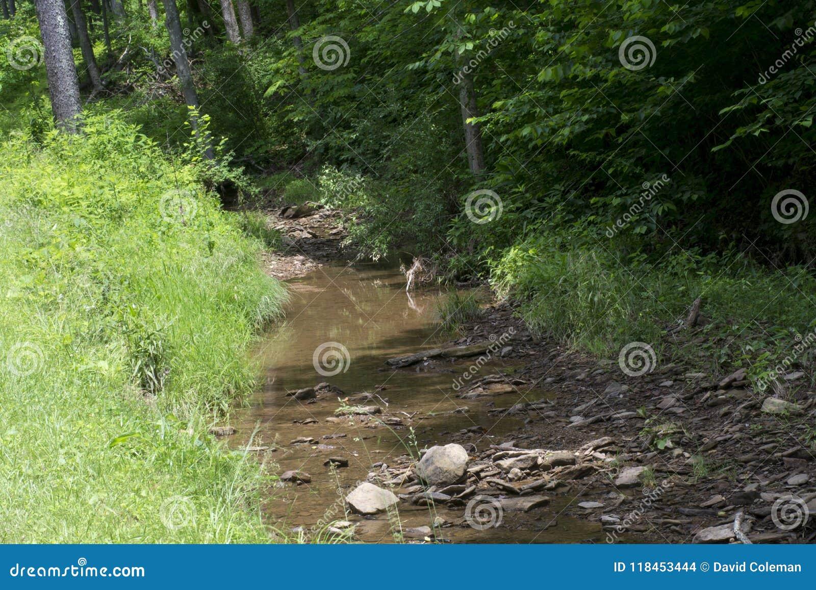 Courant découlant de la forêt