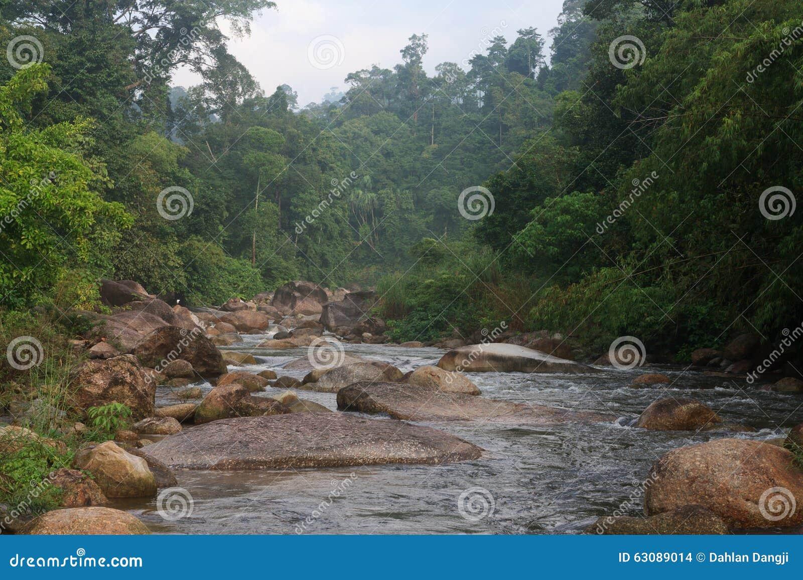 Download Courant De L'eau Dans La Forêt Photo stock - Image du pureté, forêt: 63089014