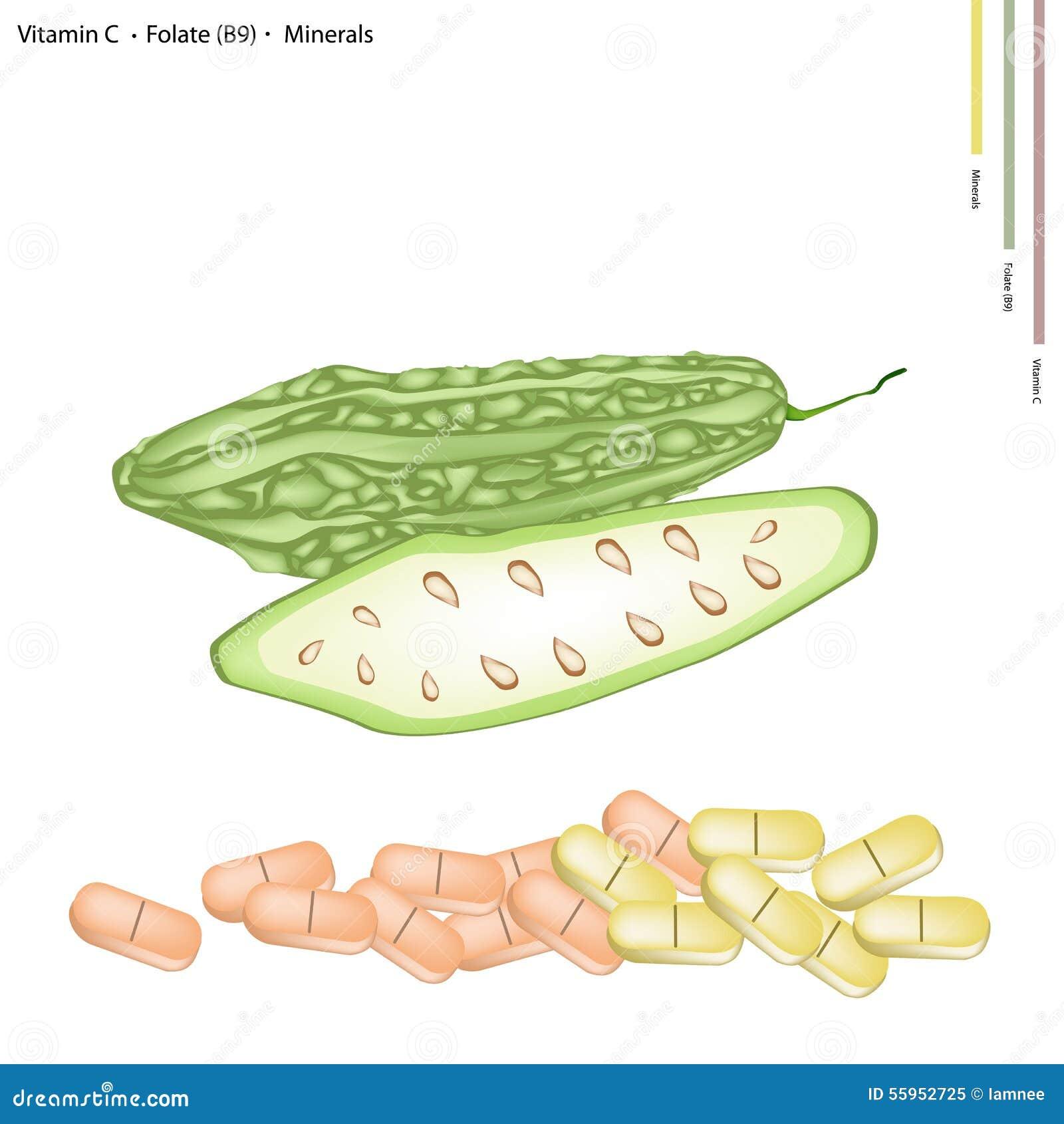 Courge amère avec la vitamine C, le B9 et les minerais