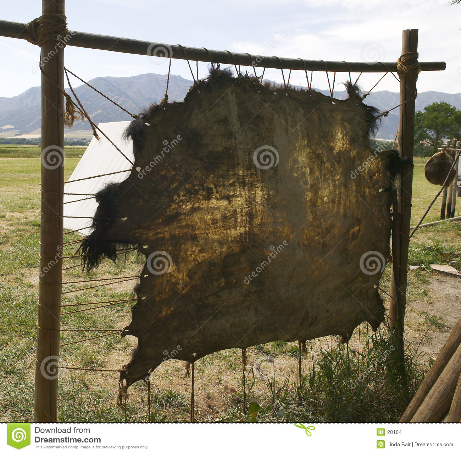 Couro cru do búfalo