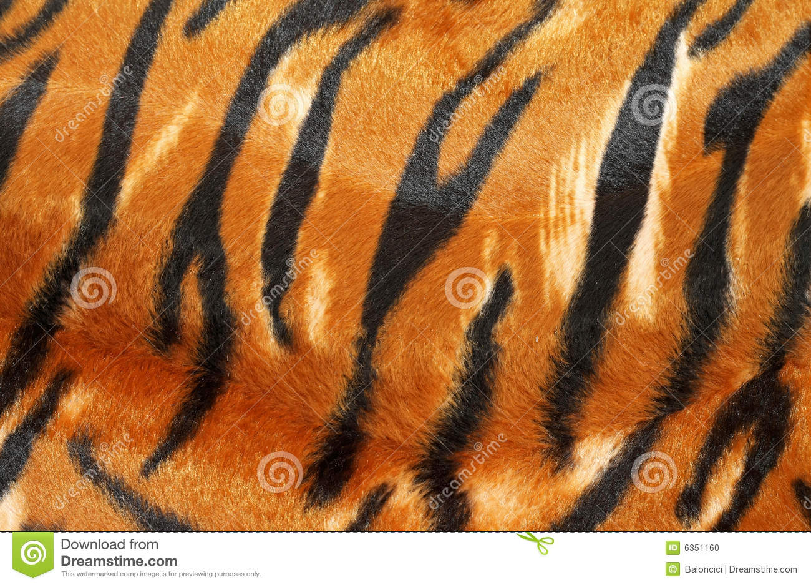 Couro cru do tigre