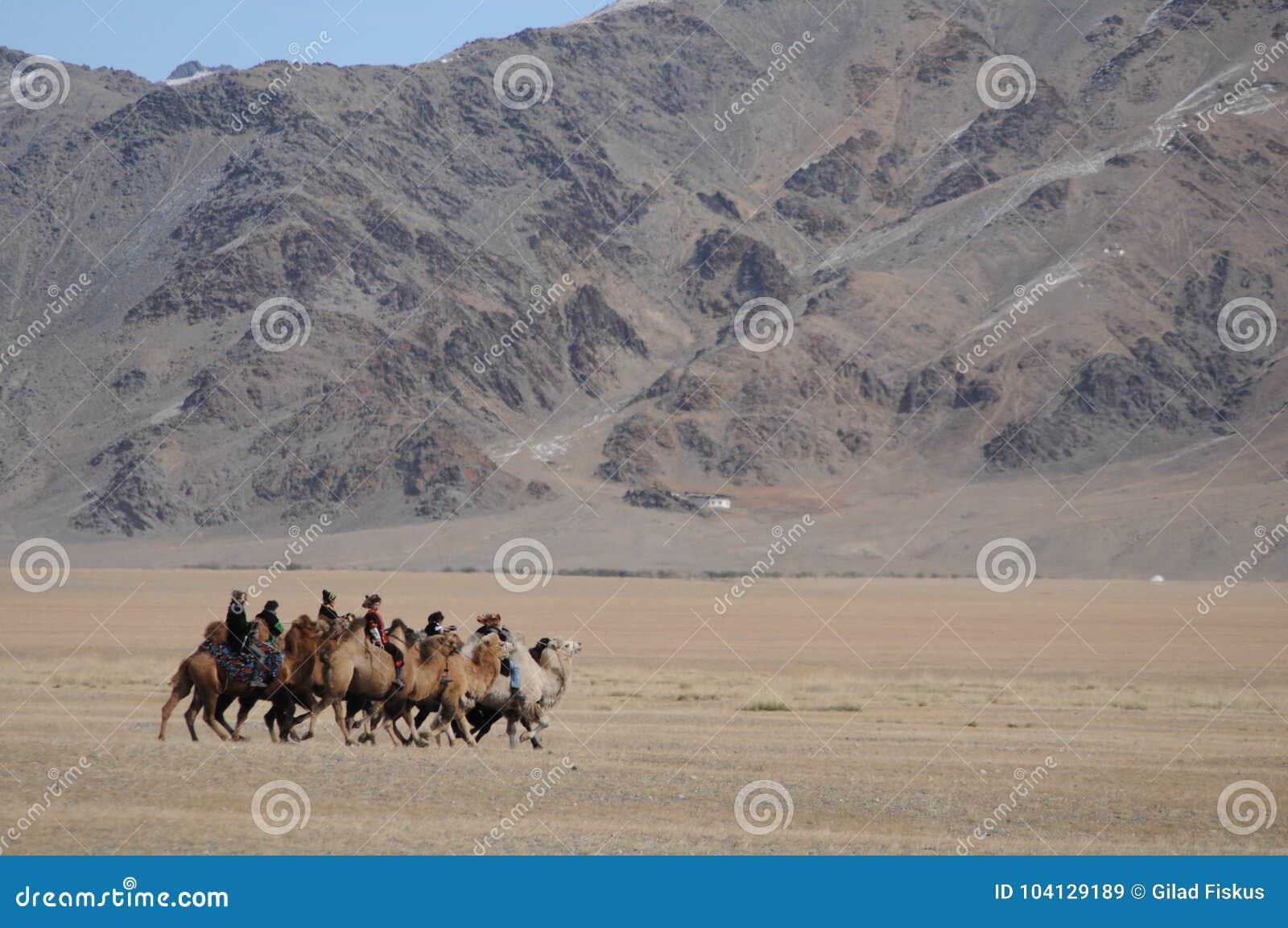 Course de chameau dans les montagnes de la Mongolie pendant Eagle Festival d or