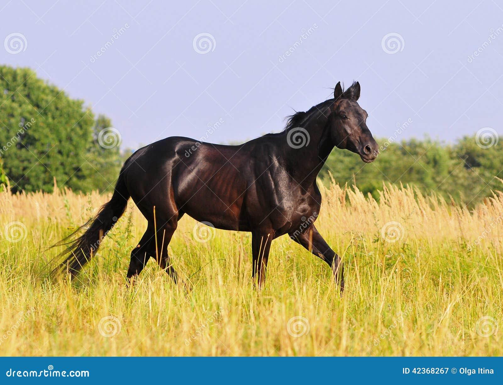 course noire de cheval gratuite dans le domaine d t