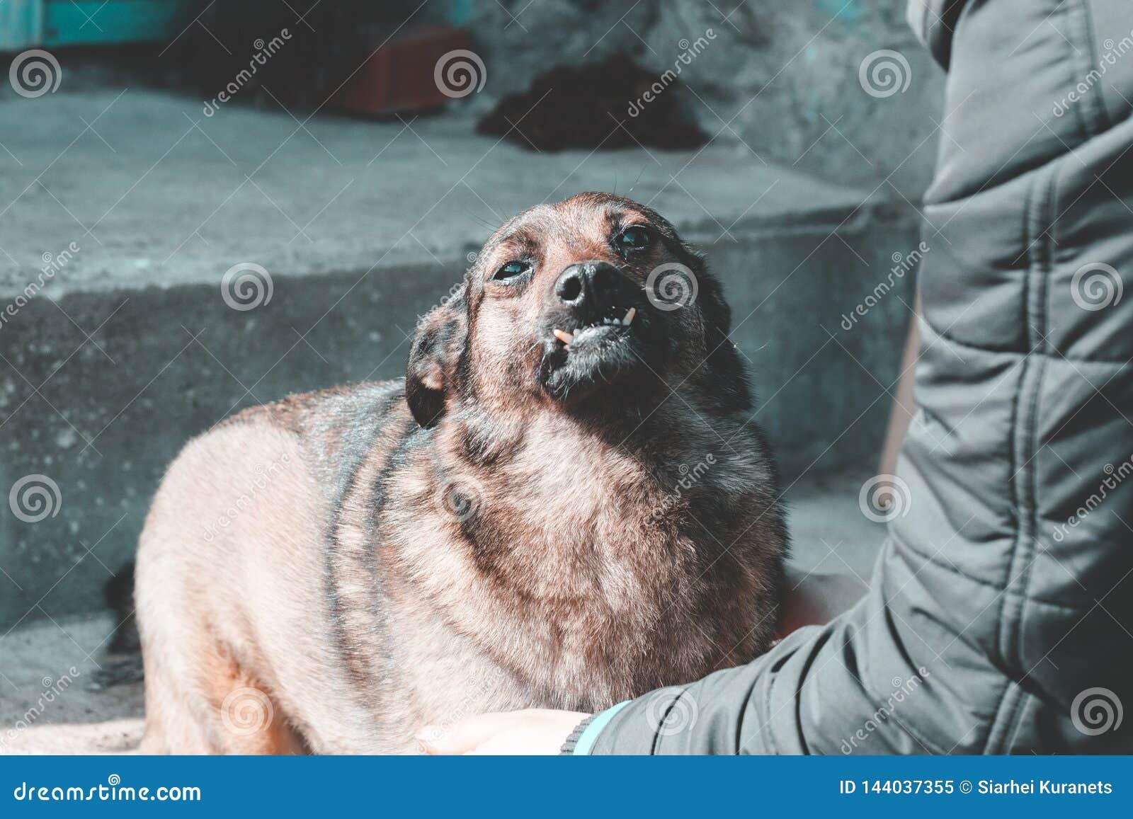 Courses de fille un chien égaré elle aime vraiment Profondeur de zone