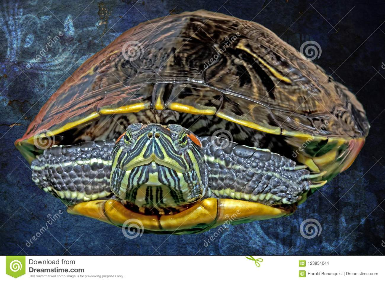 Illustration Of An Eastern Painted Turtle Against A