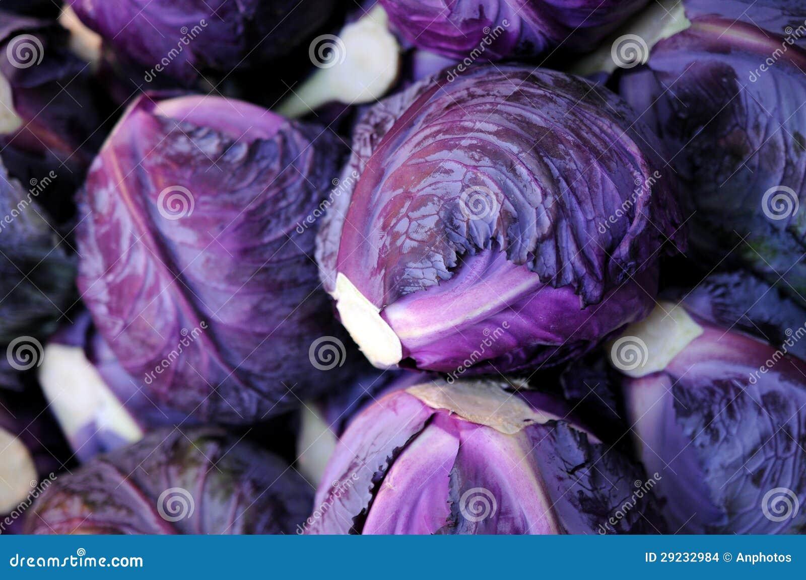 Download Couve roxa foto de stock. Imagem de venda, vegetal, muitos - 29232984