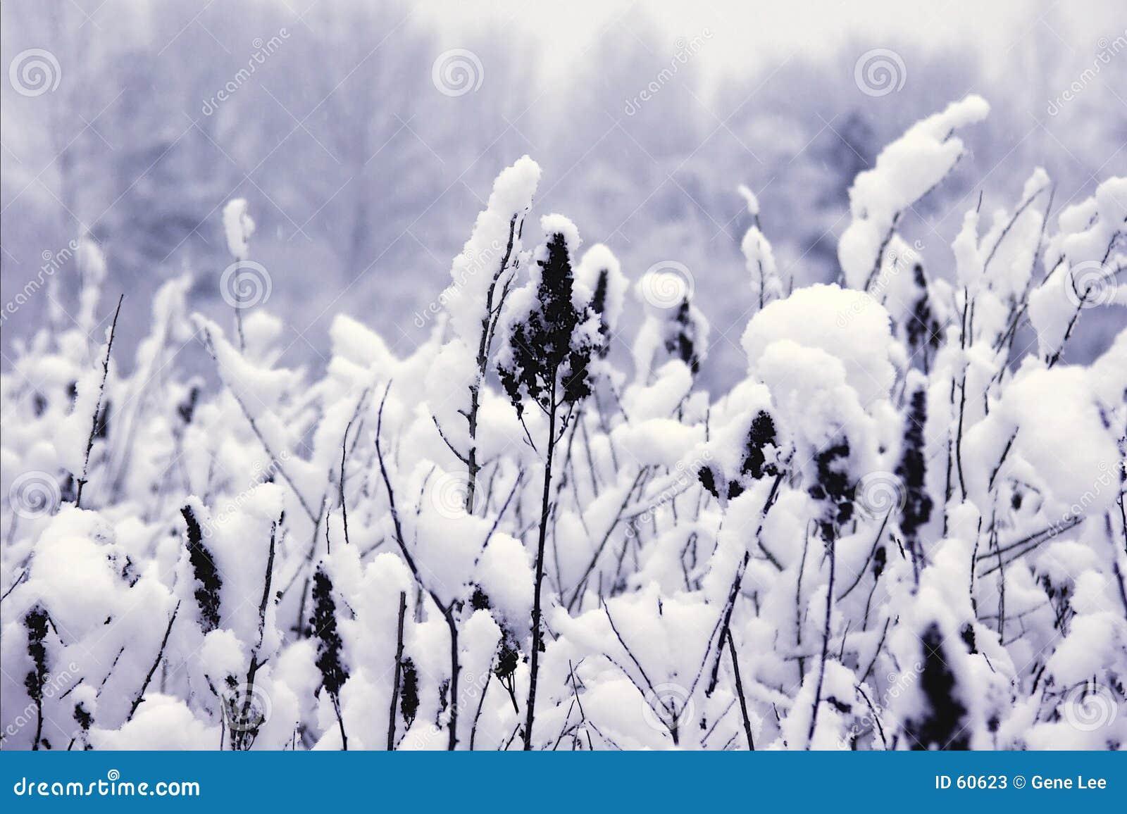 Download Couvert de neige image stock. Image du givré, centrales - 60623