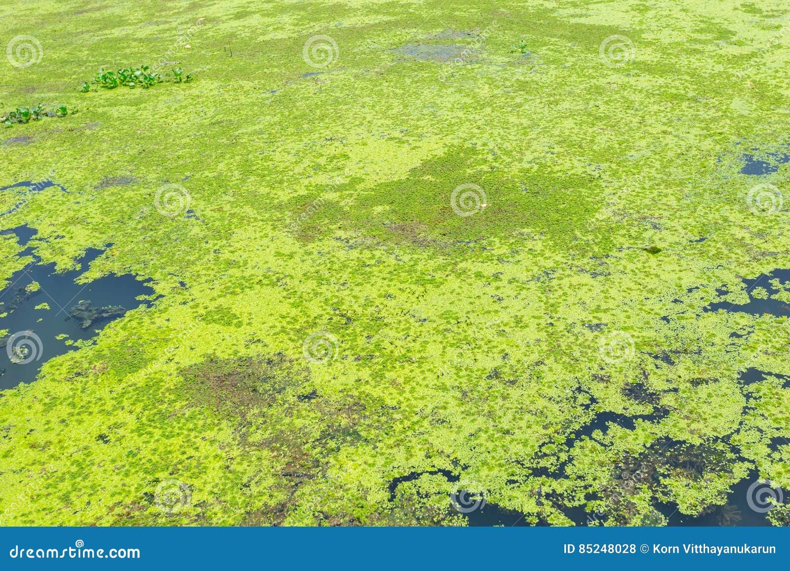 Couverture De Mousse La Riviere Photo Stock Image Du Pollution