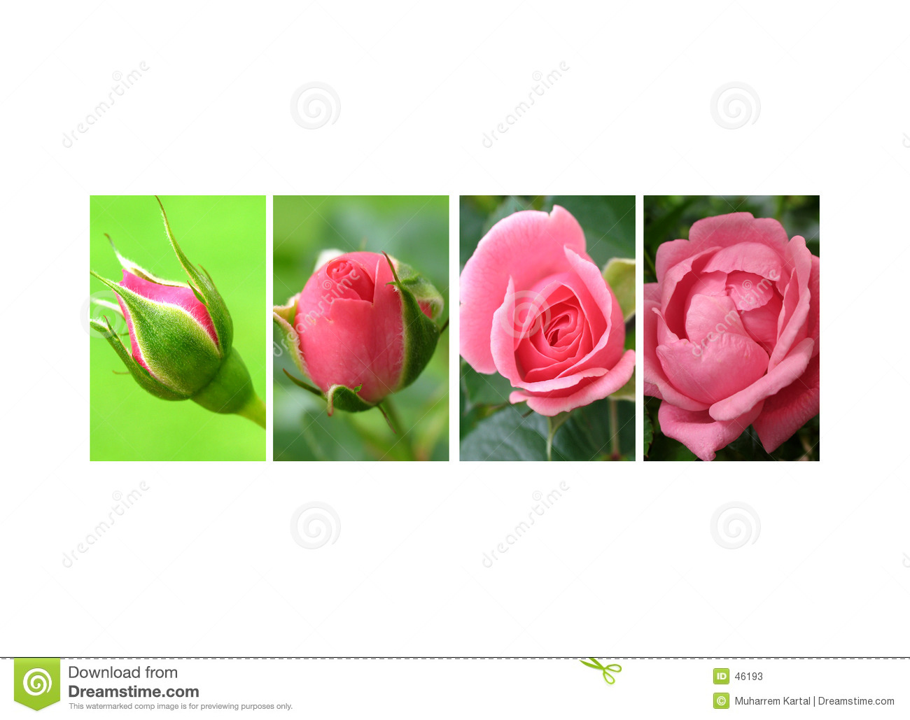 Coverage of roses