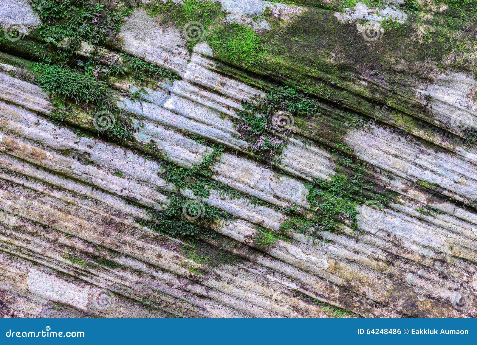 Coverd мха на каменной текстуре в лесе