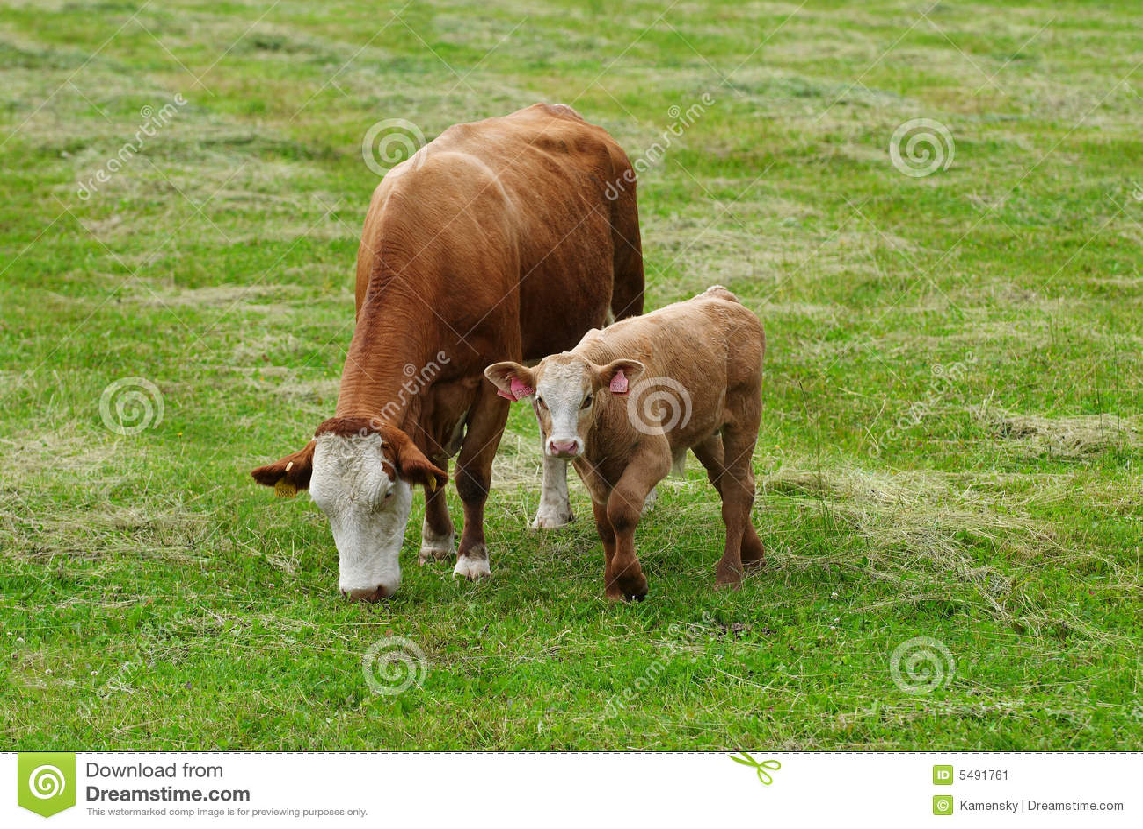 секс фото у коровы.