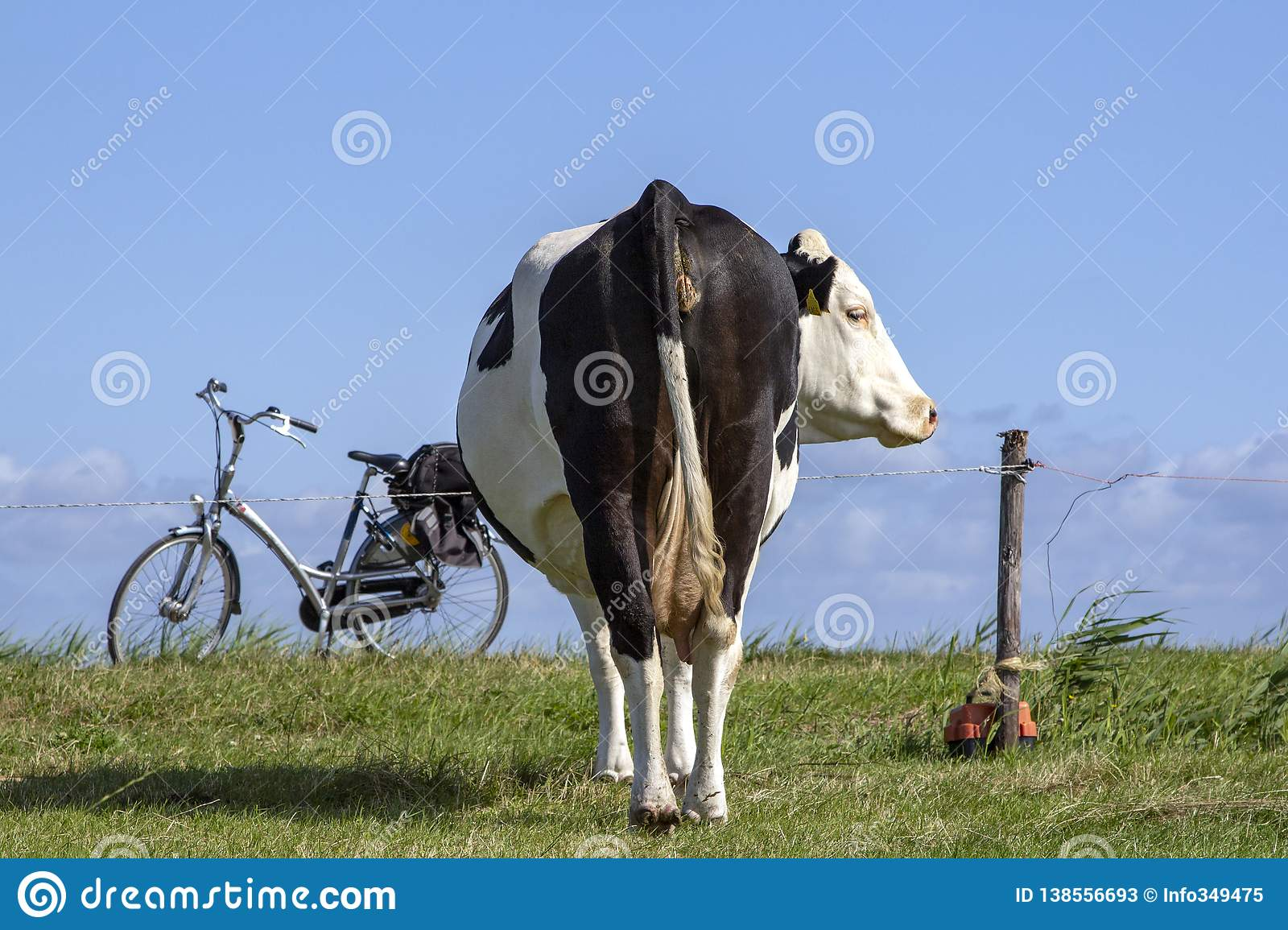 A cow from behind an electric fence and a bike on standard.