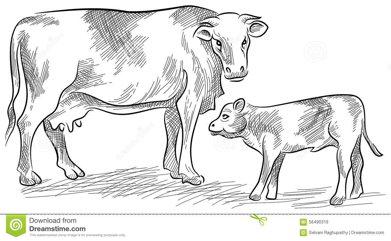 Line Art Vector Illustrator : Cow and calf stock vector image
