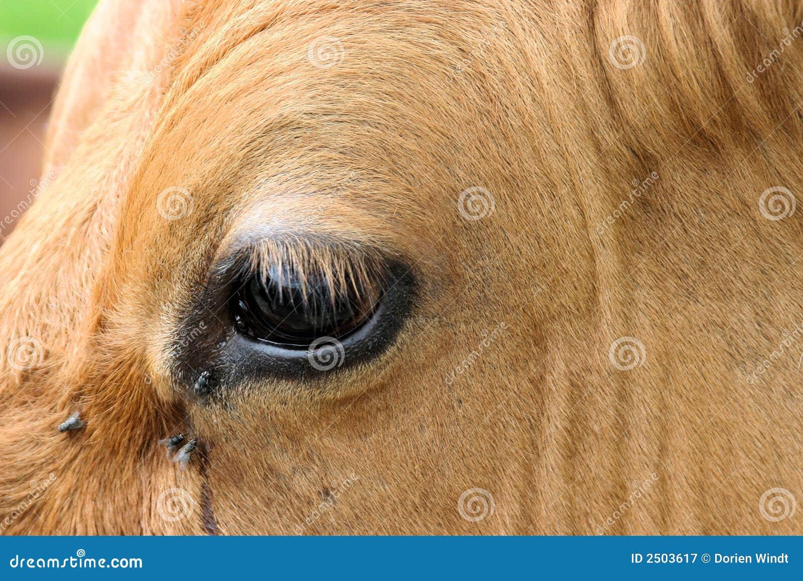 cow eye royalty free stock photography image 2503617 eyeball clip art free eyeball clip art attention
