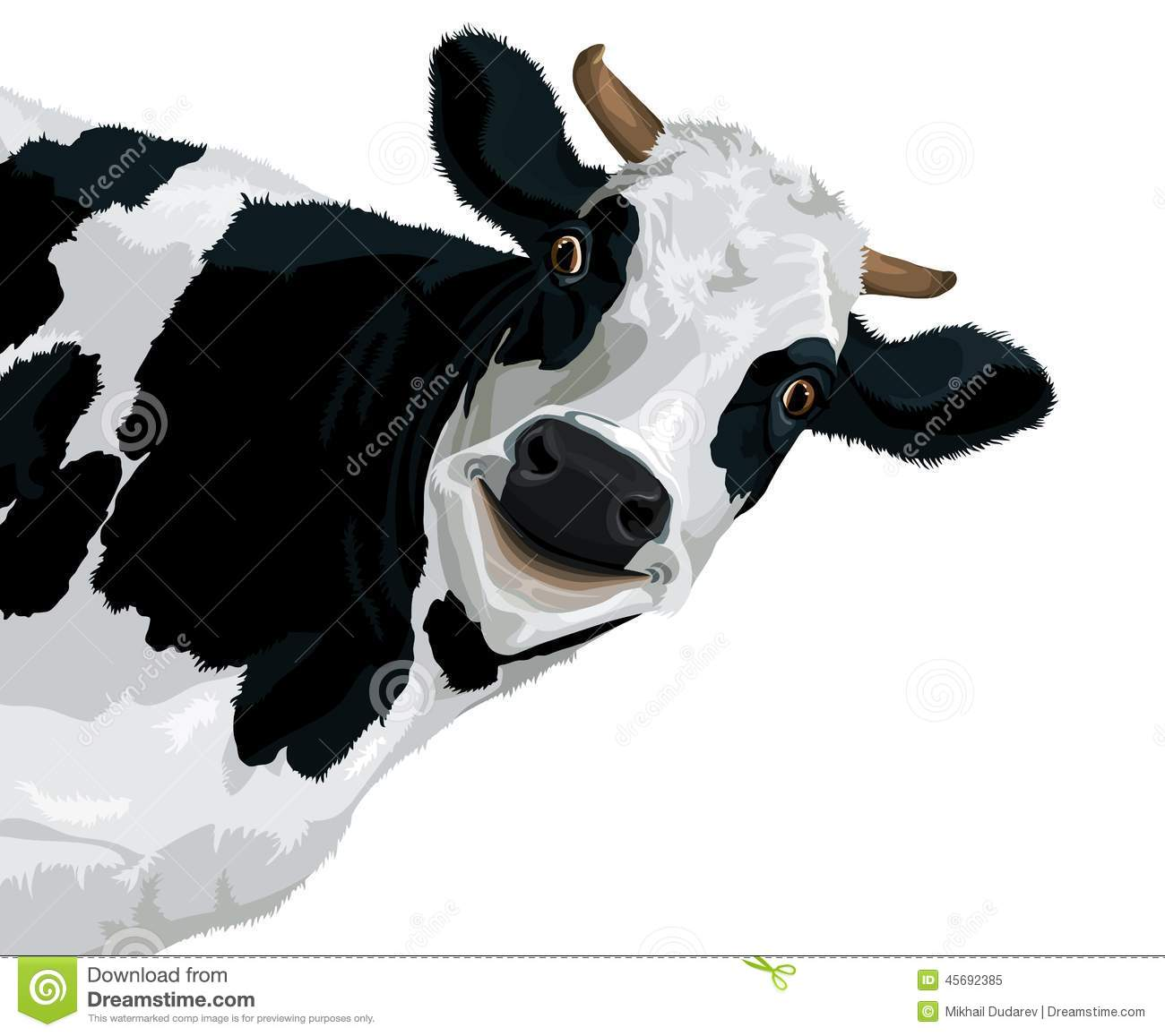 Funny cow smiling - photo#17