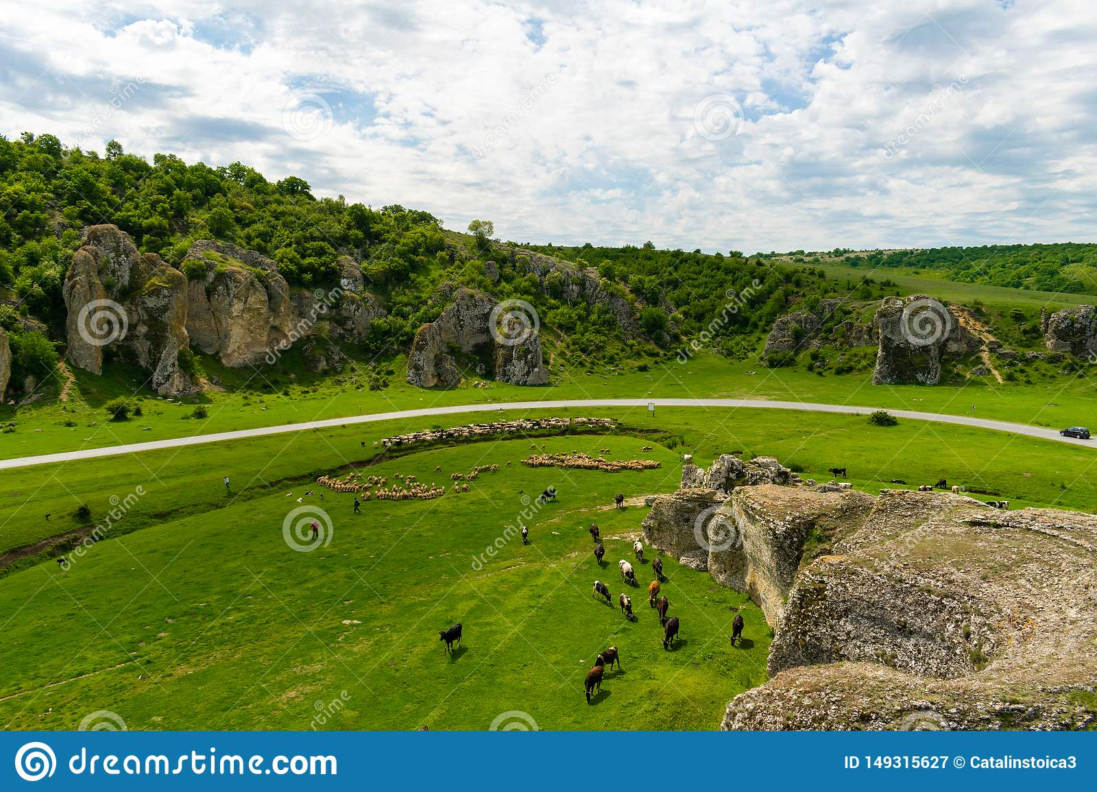 Cow and goats grazing in Dobrogea Gorges area, Romania