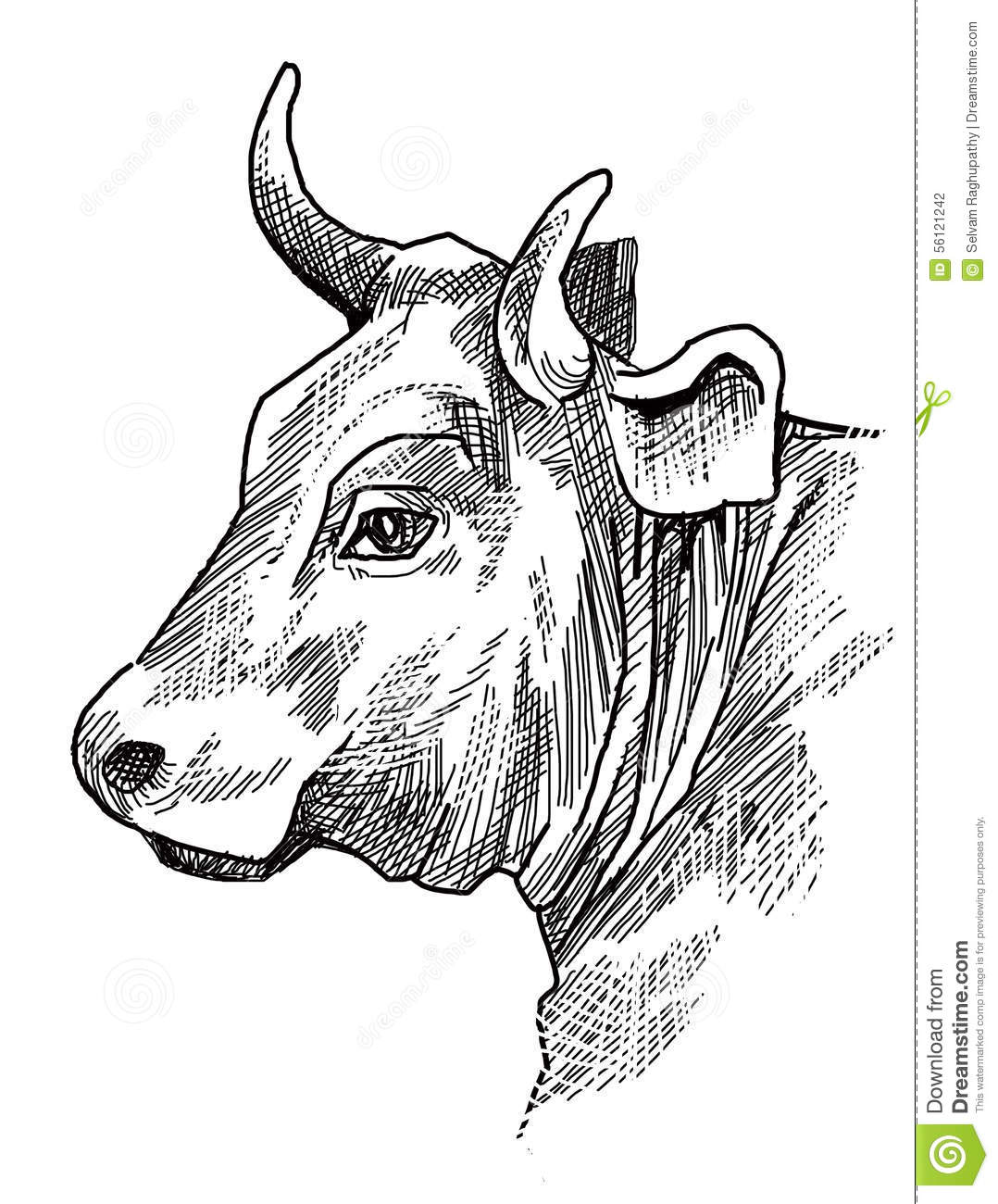 Line Drawing Cow Face : Cow head stock illustration of cattle