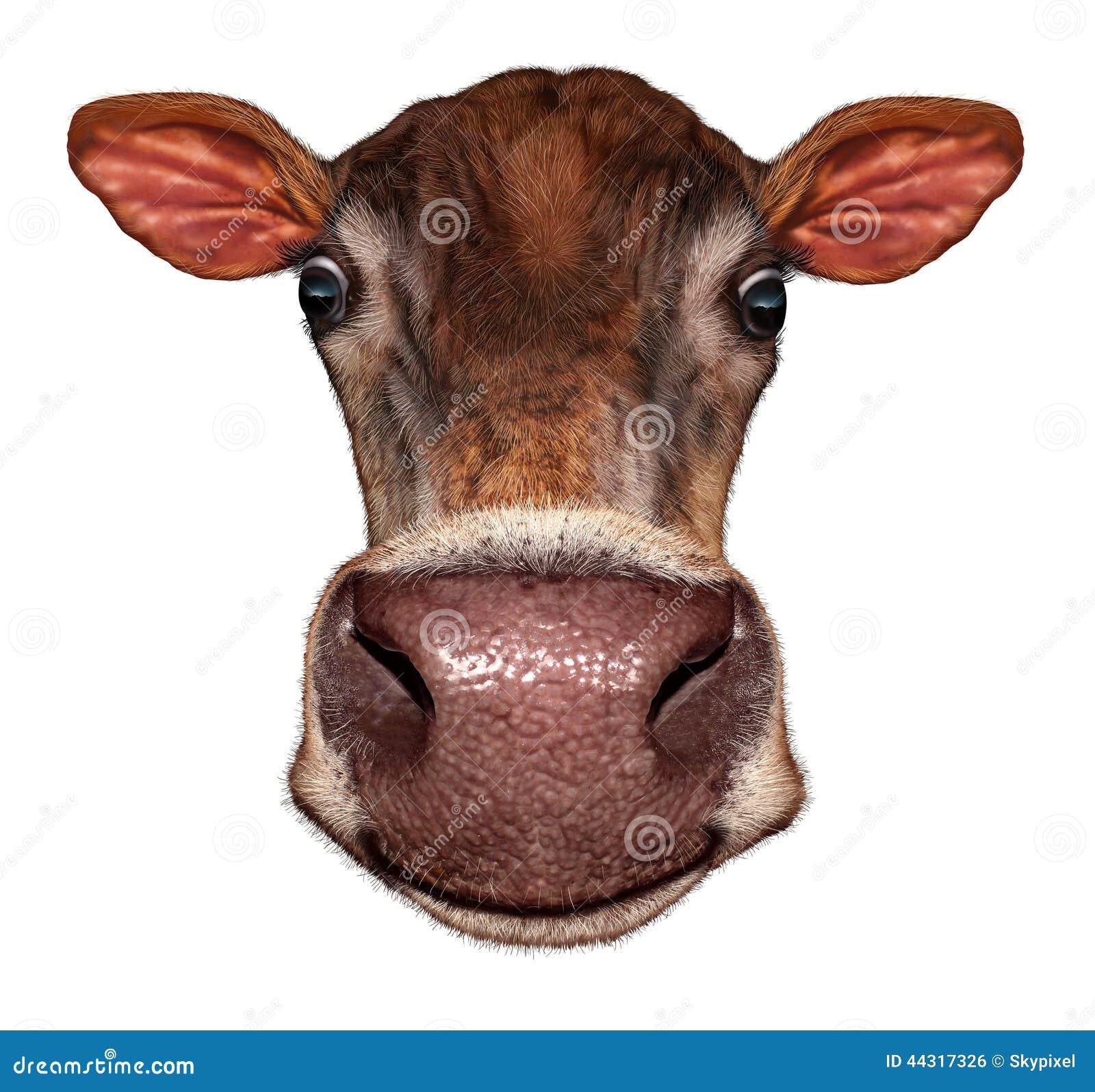 Cow Head Stock Illustration - Image: 44317326