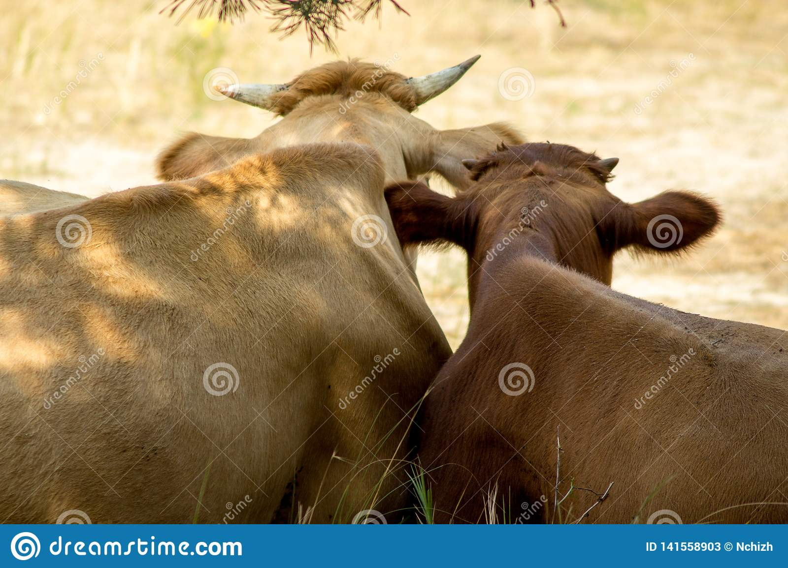 The cow and her calf have a rest