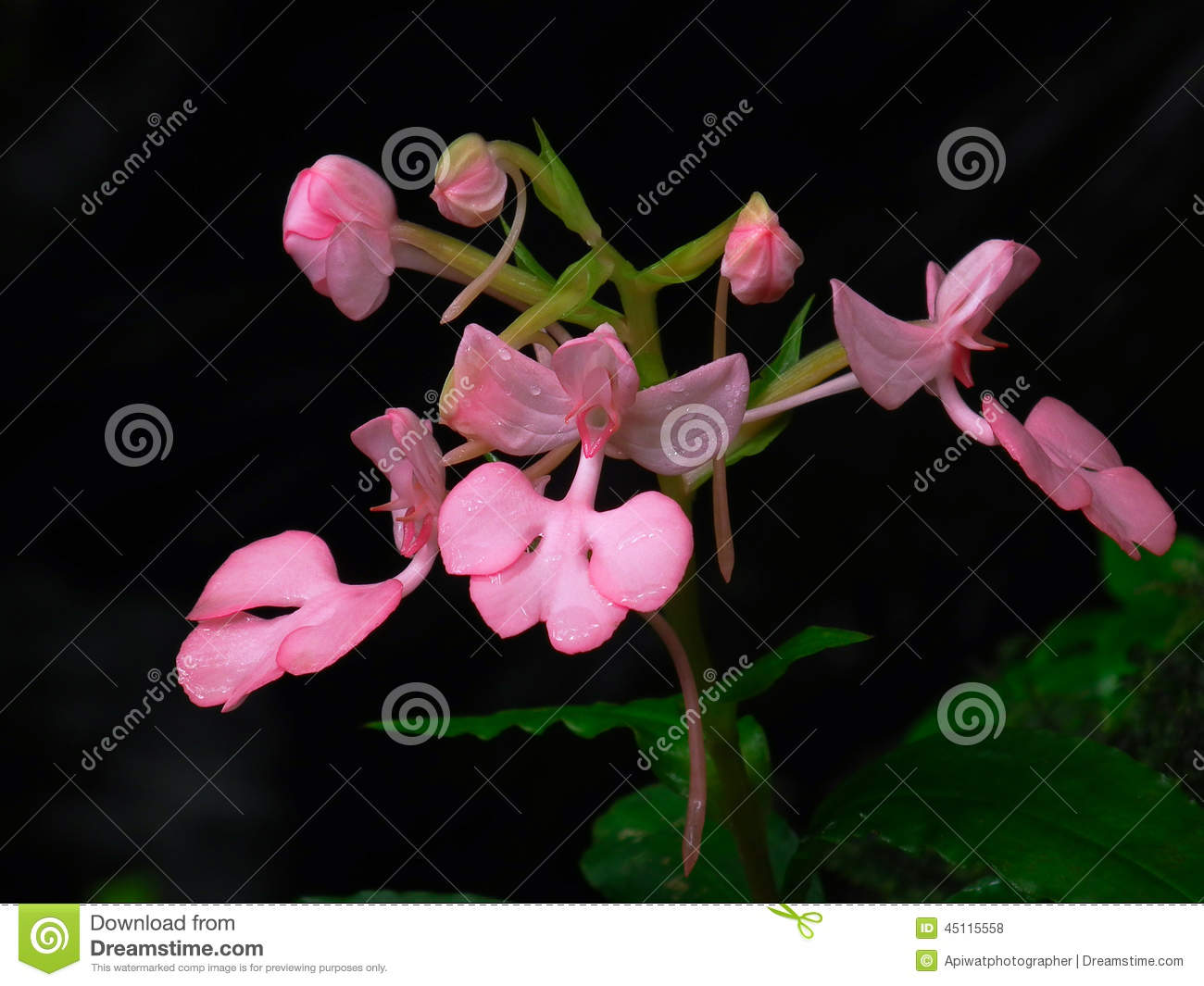 The cow lily flower stock photo image of travel forests 45115558 download the cow lily flower stock photo image of travel forests 45115558 izmirmasajfo