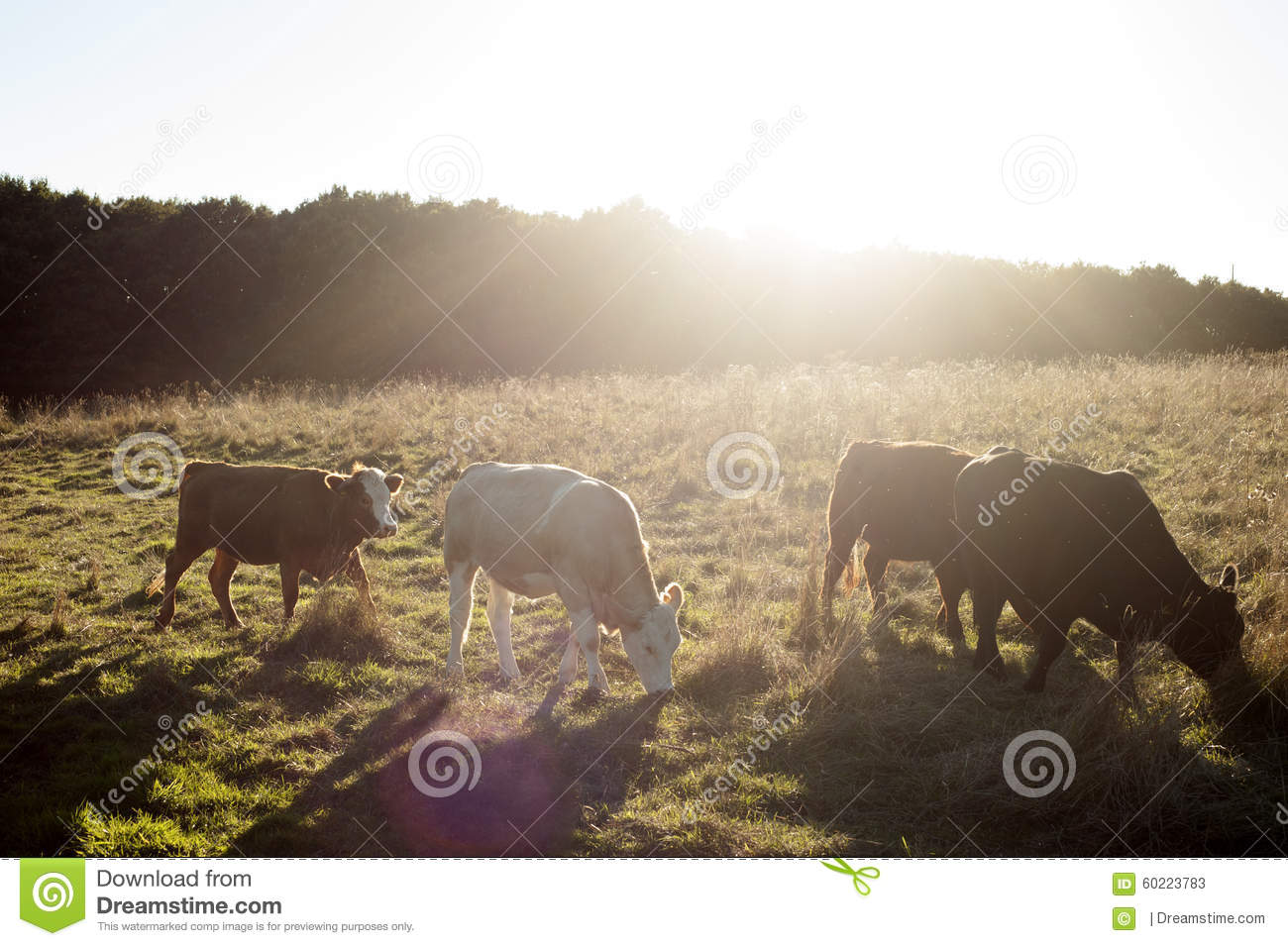 cow line stock photo image 60223783 Cow Eating Grass in the Field Cow Eating Grass SVG