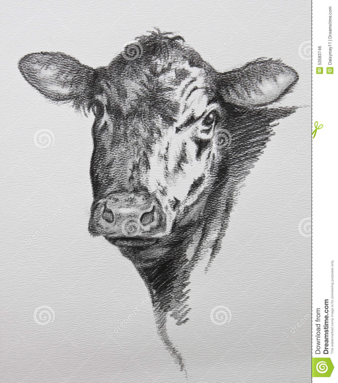 Royalty Free Stock Image: Cow Pencil Drawing. Image: 53583746