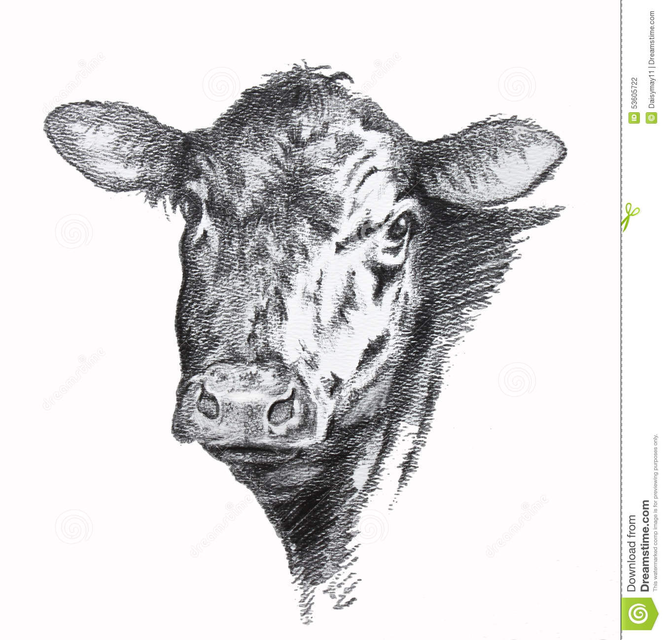cow pencil drawing stock illustration image 53605722