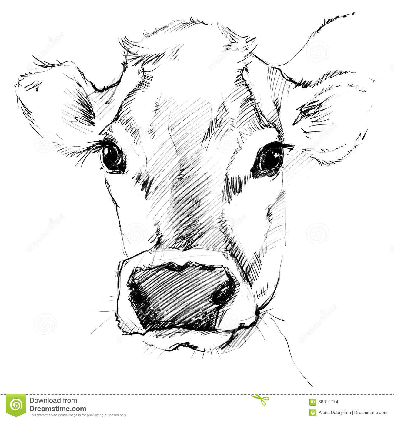 Cow sketch dairy cow pencil sketch