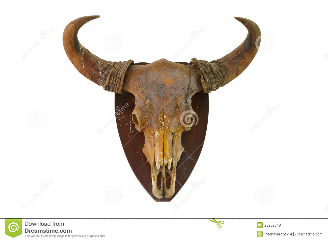 Download Cow skull stock photo. Image of isolated, animal, dead - 28232648