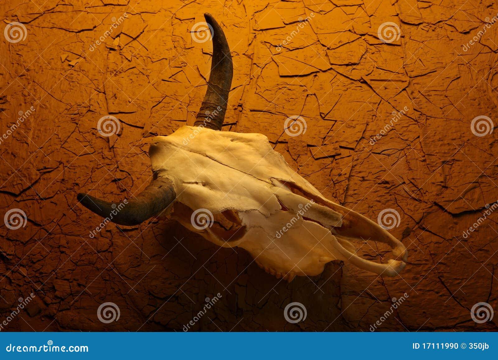 cow skull and desert - photo #5