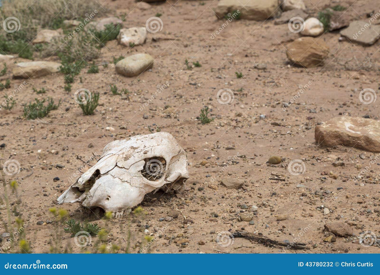 cow skull and desert - photo #13