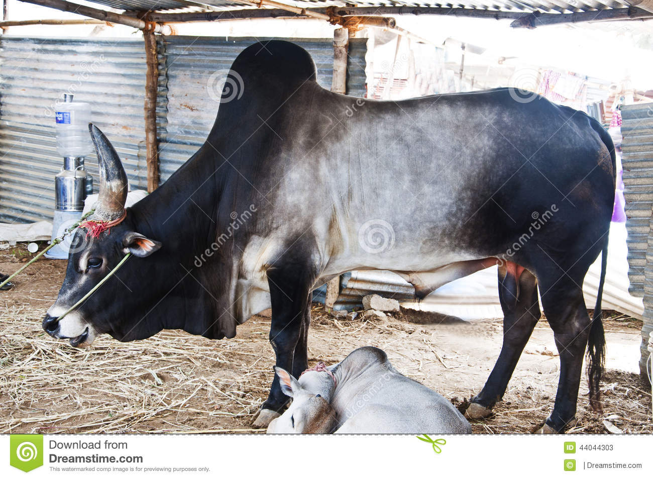 how to start a cow farm in tamilnadu