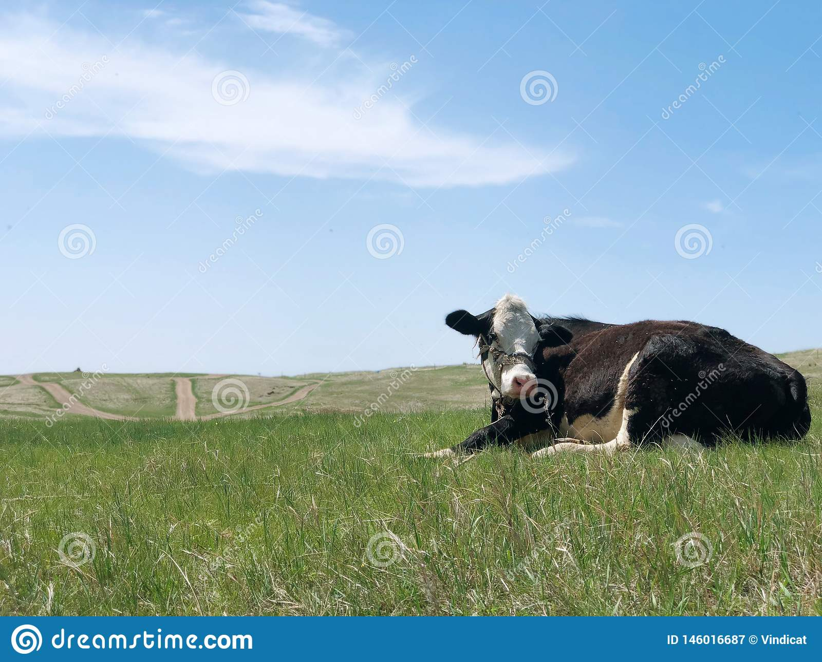 Cow and windmill on the grassland