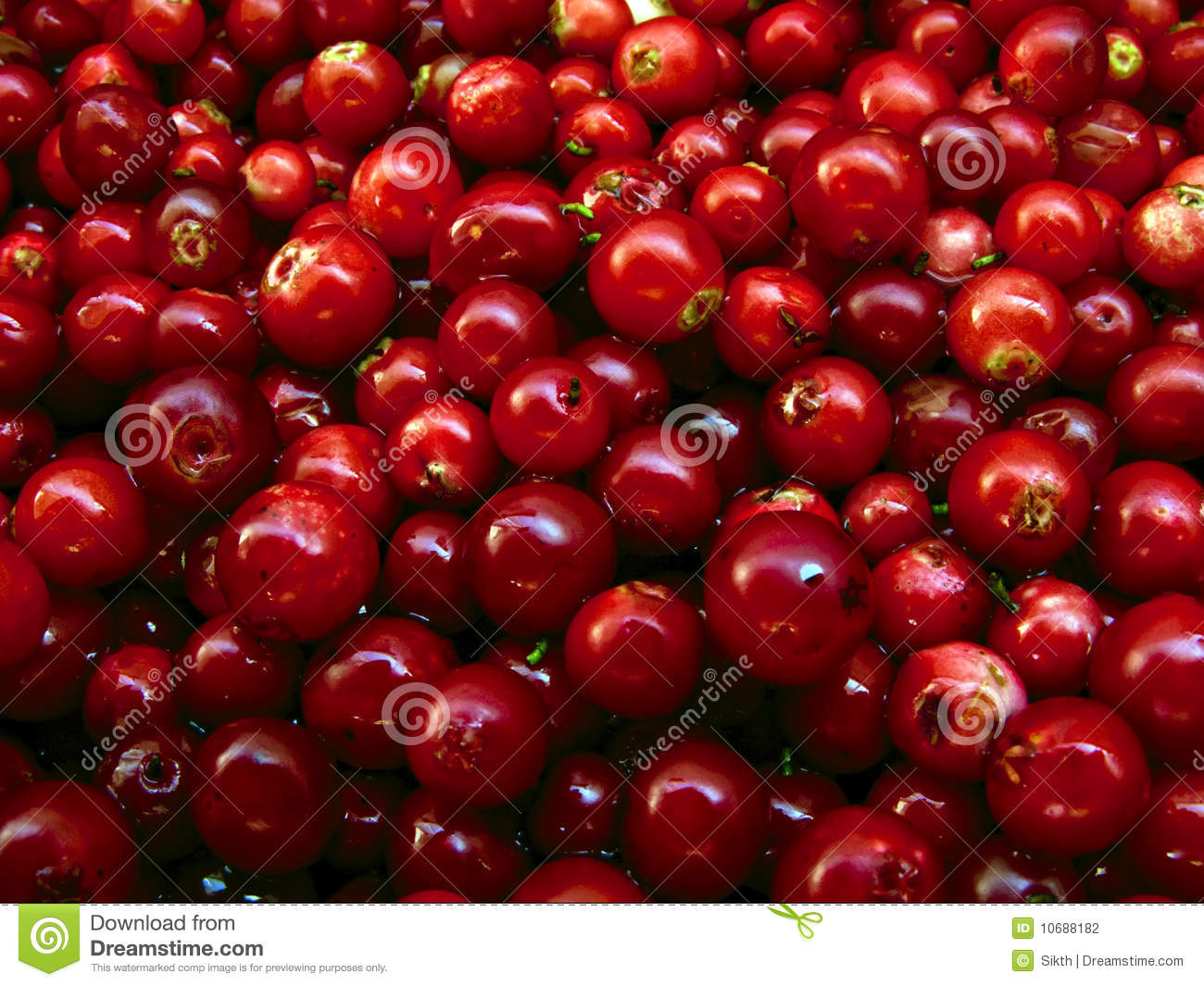 Cowberries stock photo. Image of fresh, dieting, cranberries ...