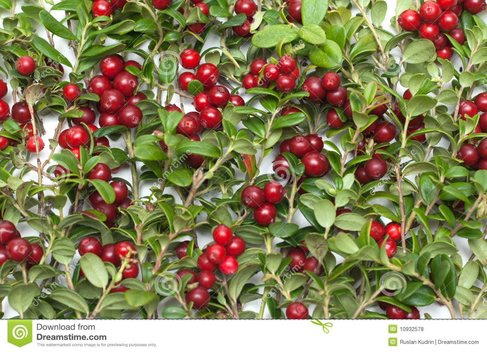 Cowberry предпосылки