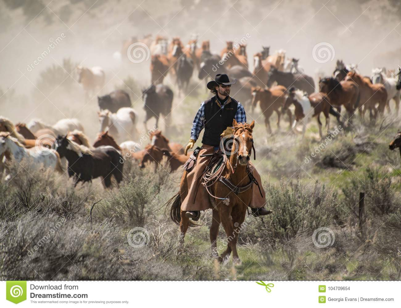 Cowboy with black hat and sorrel horse leading horse herd at a gallop